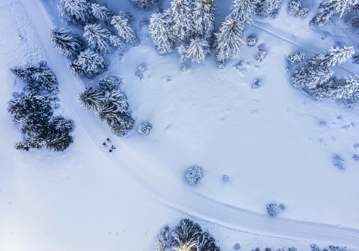 Faire de la luge dans la forêt d'hiver